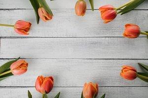 Tulips on Whitewash