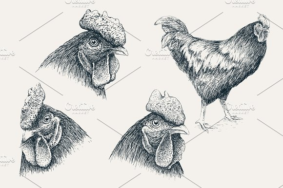 Collection Of Rooster Heads
