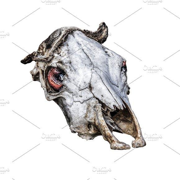 Creepy Cow HeadBones Artwork