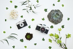 Vintage cameras with succulents.