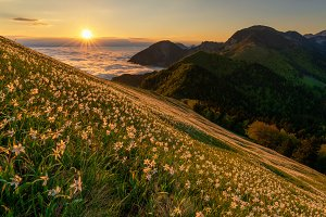 Flowers under mountain at sunrise
