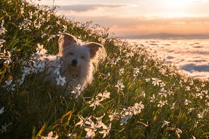 Dog playing on the meadow in spring