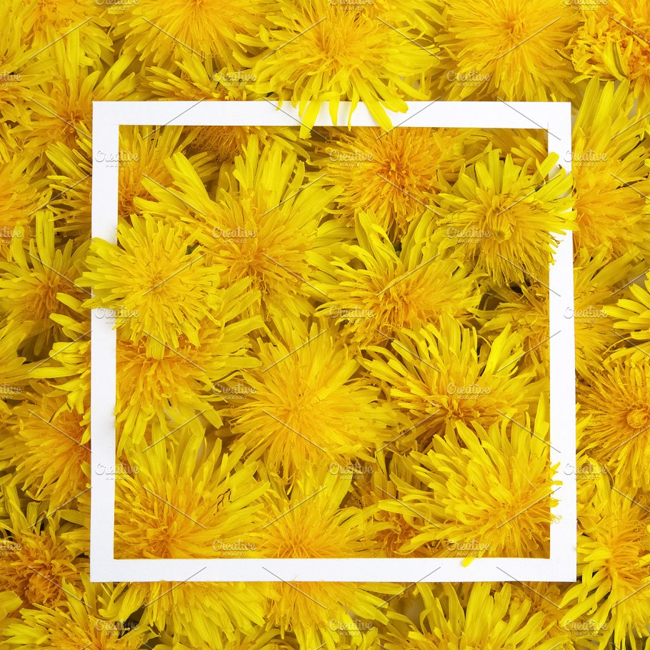 White frame on yellow flowers background spring summer concept white frame on yellow flowers background spring summer concept flat lay top view mightylinksfo