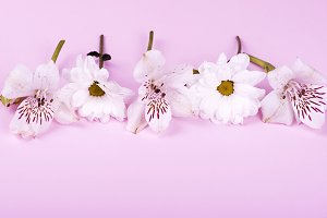 Flowers on pink background. Flowers isolated. Horizontal shoot.