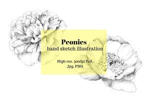 Peony hand sketch