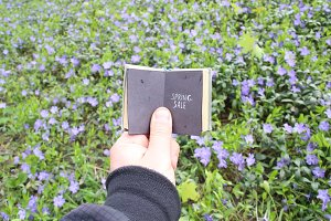 Spring sale, book with text and field with blue flowers