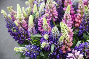 Multicolored delicate lupine flowers - natural decorations for decorating a house or a wedding