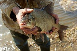 Big bream in fisherman's hand