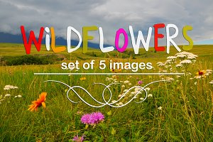 Wildflowers-set of 5 images