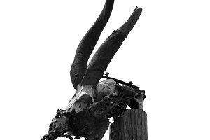 Antelope Skull Horns