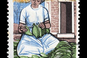 Woman Tobacco Leaves Postage Stamp