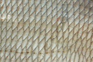 Bream fish scales