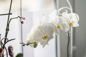 Close up photo of white orchid on window sill.