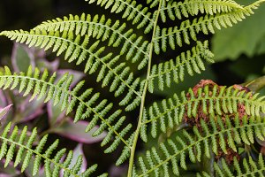 Green fern frond in the woods
