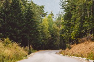 asphalt road in the mountains among the pine forests