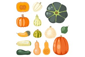 Fresh orange pumpkin seasonal food organic healthy vegetarian vegetable vector