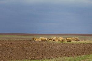 Landscape, bales of straw in field