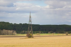 High-voltage tower in a field near a pine forest