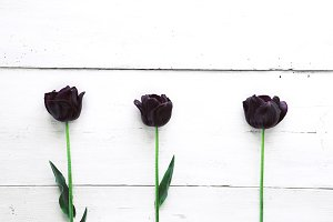 Three dark tulips on white table