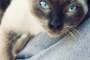 My lovely siamese