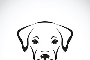 Vector of a labrador puppy face.
