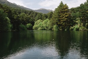Lake with trees on mountains