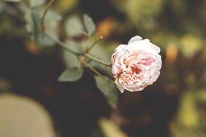 A White Flower in Warm Mood
