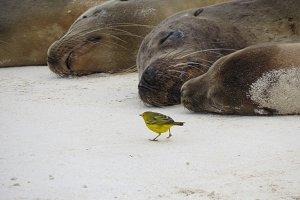 Wildlife contrast - Sea Lions