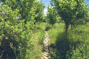 Road in green garden in Armenia