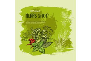 Vector poster of spices and herbs for shop