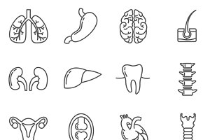 Internal human organs icons set