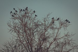 Crowded tree of birds in winter time - frozen sunrise
