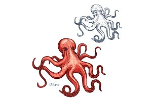 Octopus vector isolated sketch icon