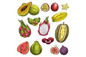 Vector sketch icons of exotic tropical fruits