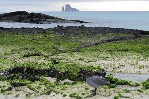 Kicker Rock - sea and shorescape