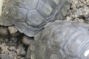 Youth - baby tortoises
