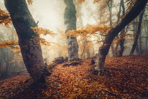 Mystical autumn forest in yellow fog