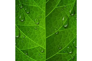 Macro view of green leaf surface with water drops