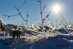 Plasticine elephant winter adventure. Frozen grass. Winter nature.