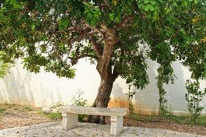 Stone bench under tree