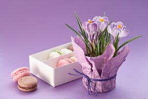Crocuses pot and box of macarons