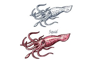 Squid seafood sea animal isolated sketch