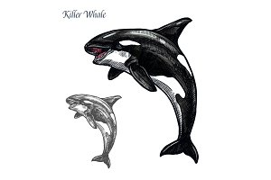 Killer whale or orca sea animal isolated sketch