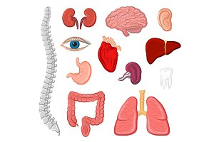 Human organ isolated icon set for anatomy design