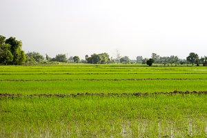 Asian farm agriculture landscape