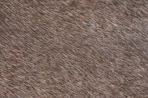Domestic animal brown fur