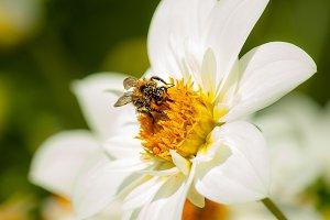 Catching pollen