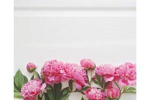 Pink peony flowers.