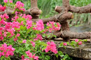 Pink flowers