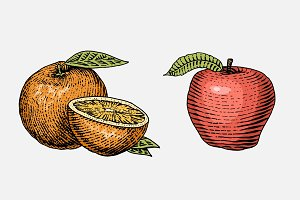 set of hand drawn, engraved fresh fruits, vegetarian food, plants, vintage looking orange and red apple